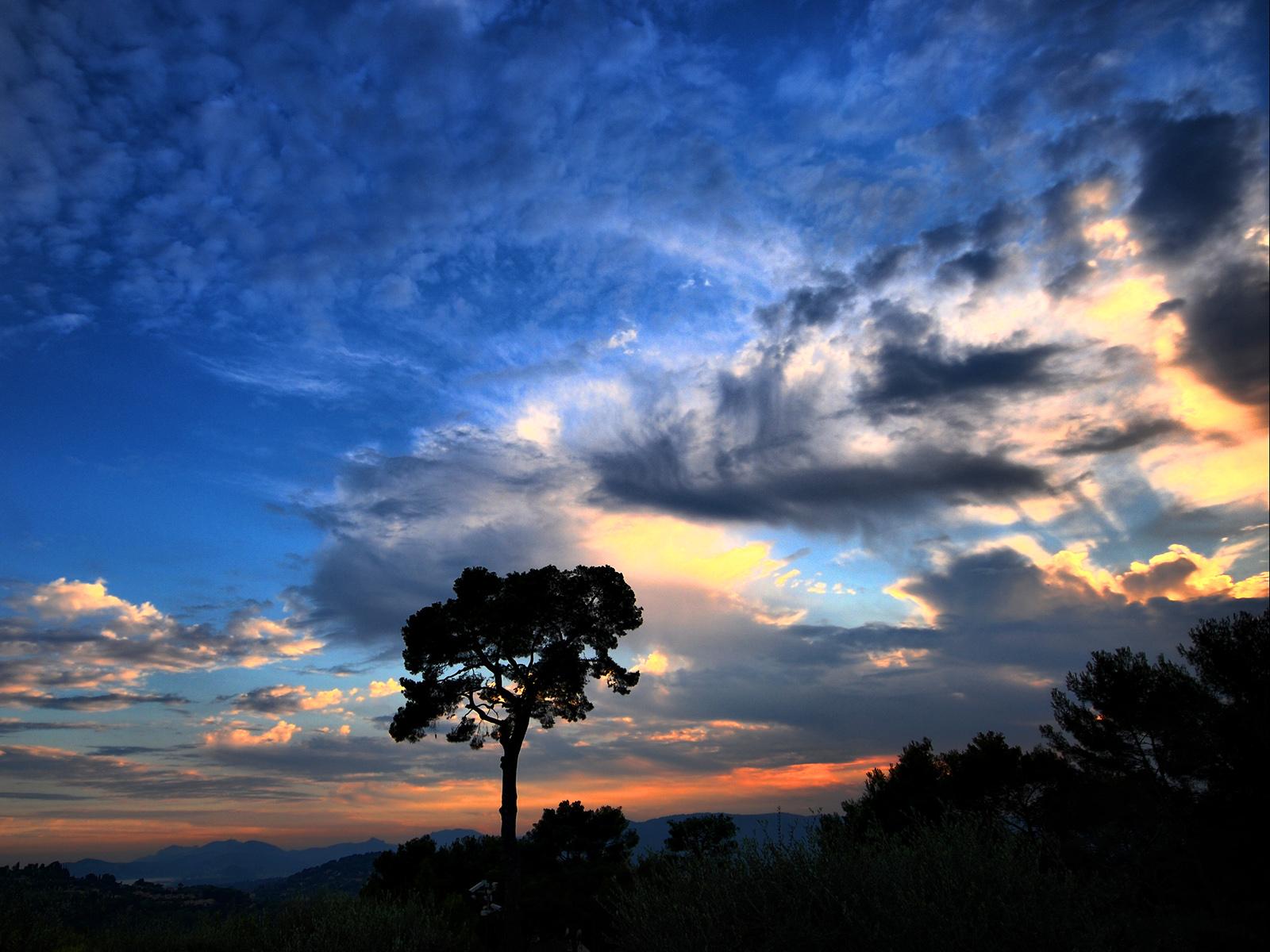 Одинокое дерево на фоне облачного неба 1600x1200 677KB небо Природа