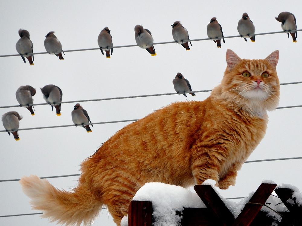 Что значит рано пташечка запела как бы кошечка не съела
