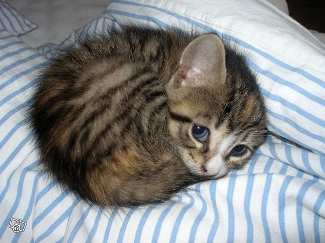 Обои и картинки 639x479 56KB Кошки, котята