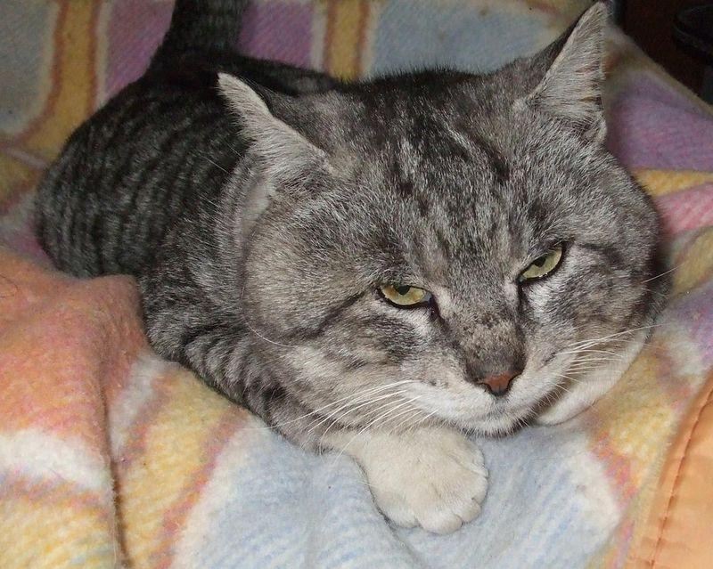 Обои и картинки 800x639 106KB Кошки, котята