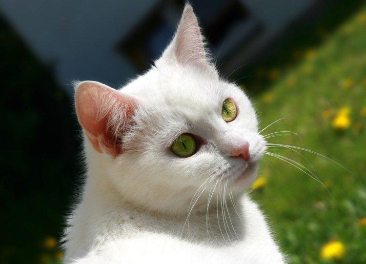 Обои и картинки 750x541 58KB Кошки, котята