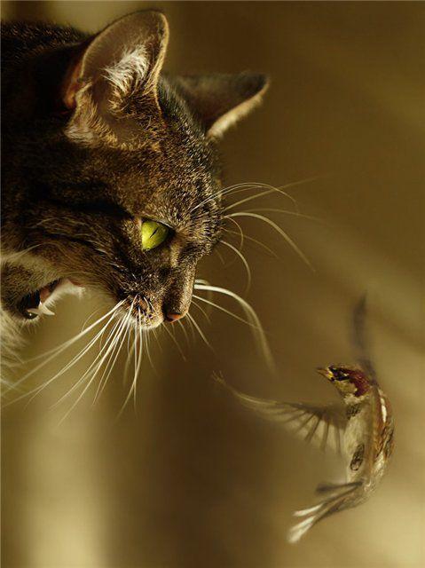 Обои и картинки 479x640 39KB Кошки, котята