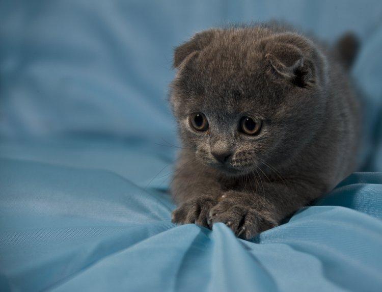 Обои и картинки 750x573 52KB Кошки, котята
