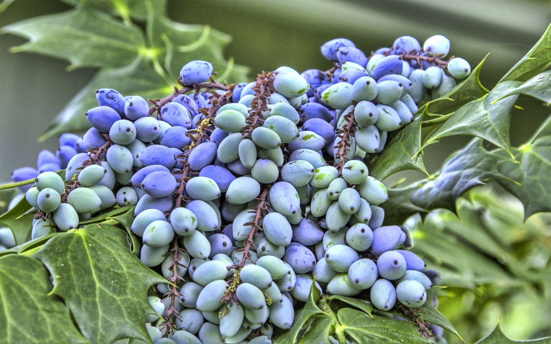 Плоды 1920x1200 341KB Растения