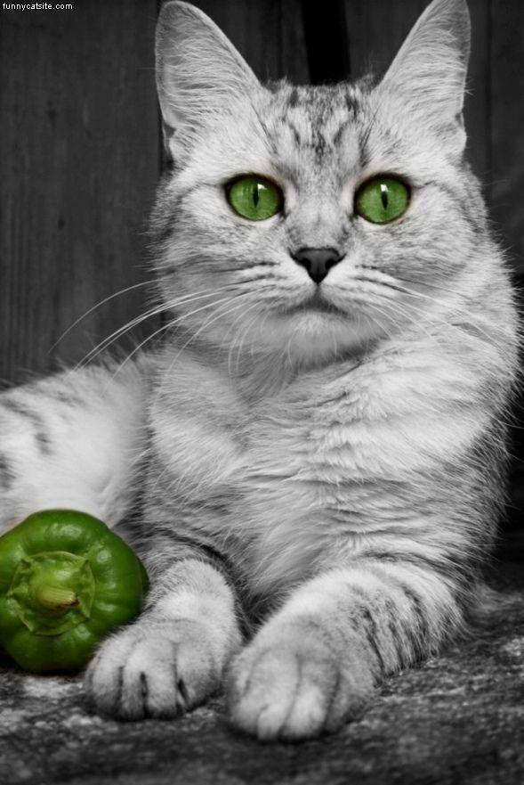 Обои и картинки 589x881 80KB Кошки, котята