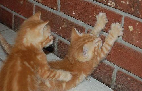 Обои и картинки 500x320 29KB Кошки, котята