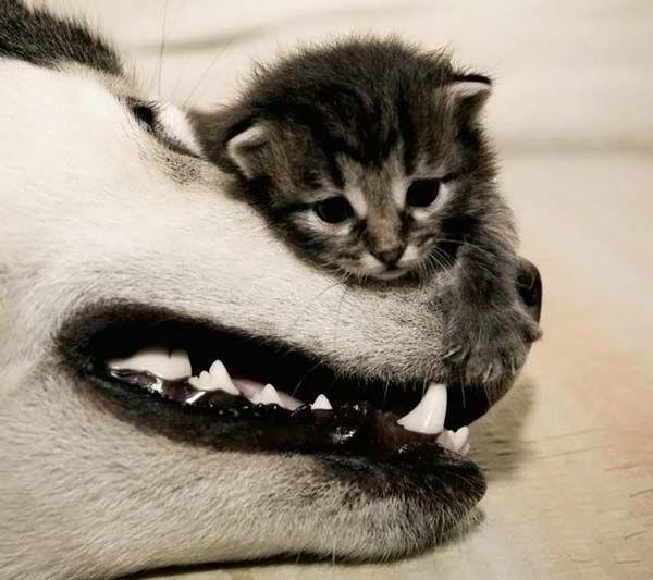 Обои и картинки 600x533 47KB Кошки, котята