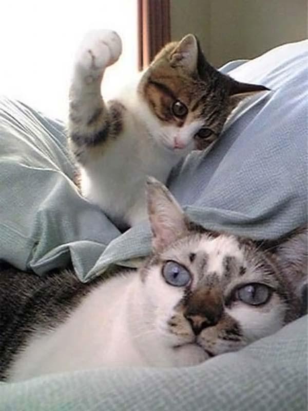 Обои и картинки 600x799 43KB Кошки, котята