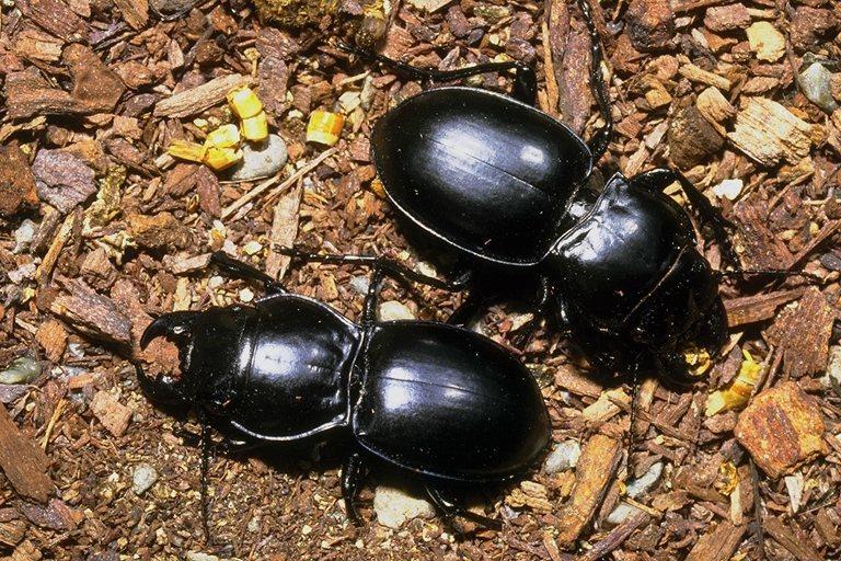 Жуки 768x512 162KB жук Насекомые
