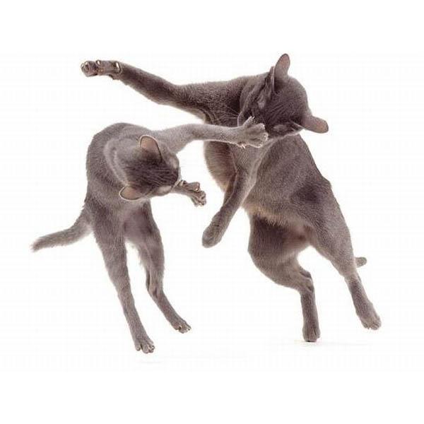 Обои и картинки 600x600 50KB Кошки, котята
