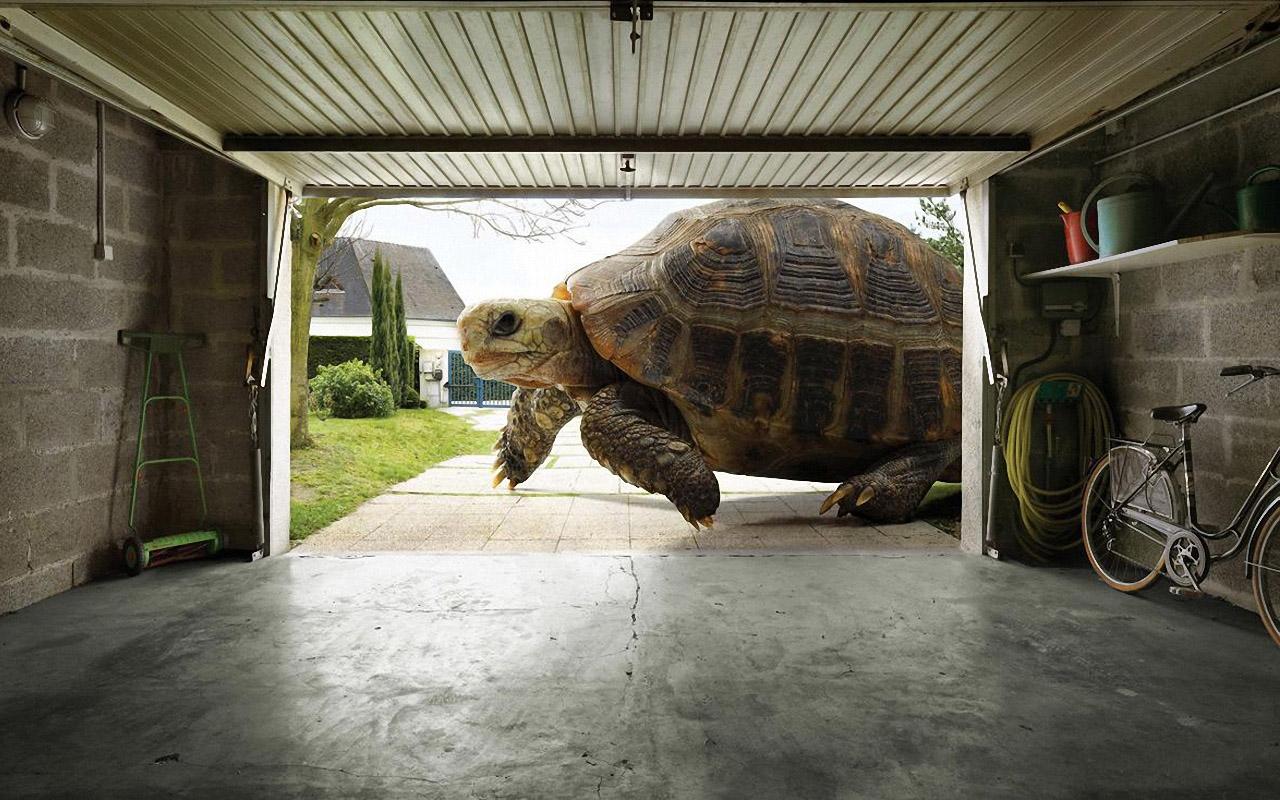 Черепашка заходит в гараж 1280x800 333KB Черепахи