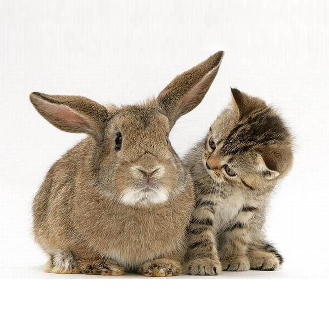 Обои и картинки 650x650 84KB Кошки, котята