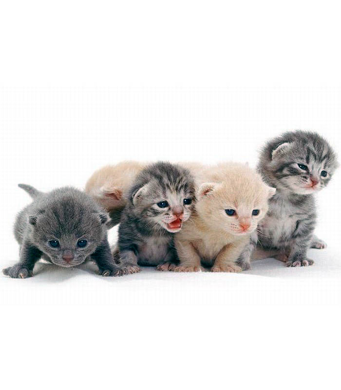 Обои и картинки 700x800 64KB Кошки, котята
