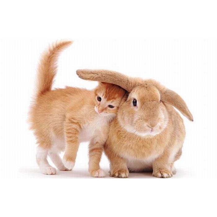 Обои и картинки 700x700 59KB Кошки, котята