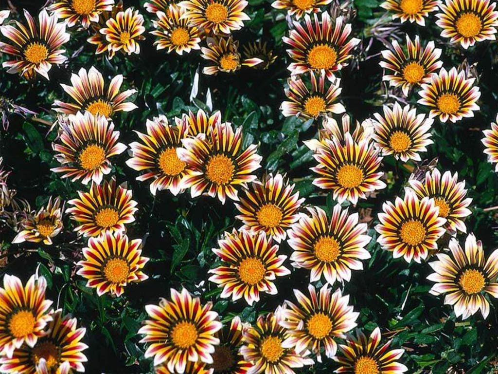 Красивые цветы 1024x768 265KB Цветы