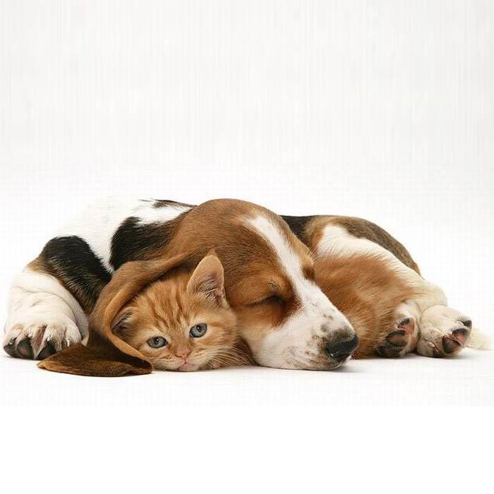 Обои и картинки 700x700 64KB Кошки, котята