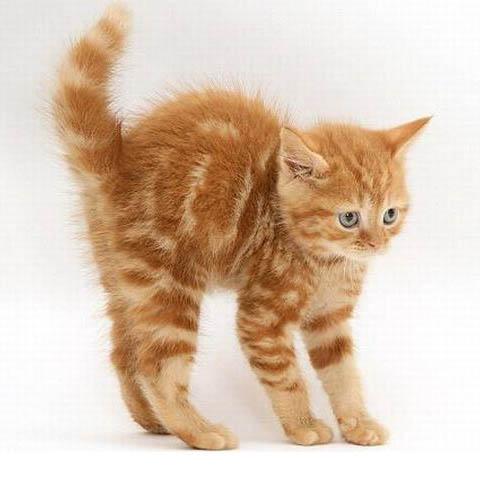 Обои и картинки 480x500 52KB Кошки, котята