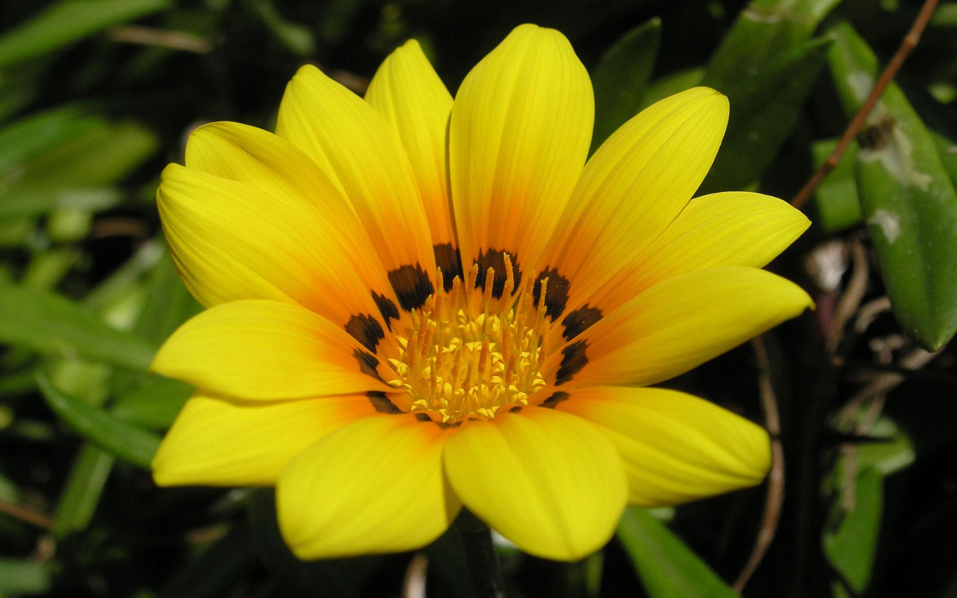 Цветок на весь экран 1920x1200 263kb цветы